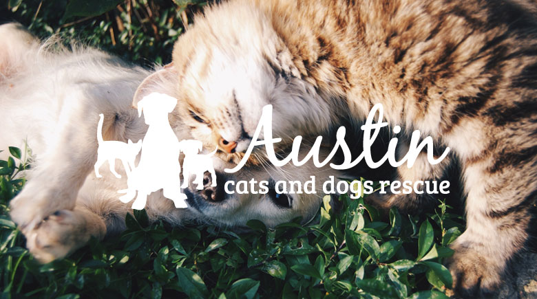 Web Design: Austin Cats and Dogs Rescue